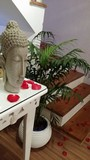 Aromaterapia preços no Sacomã