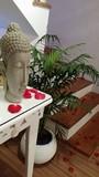Óleo para massagem relaxante no Jockey Club